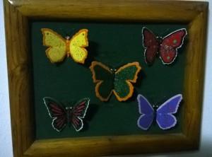Coming Soon… Collezione di Farfalle