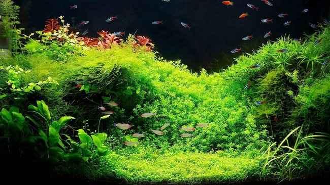 Acquario di Acqua Dolce Tropicale