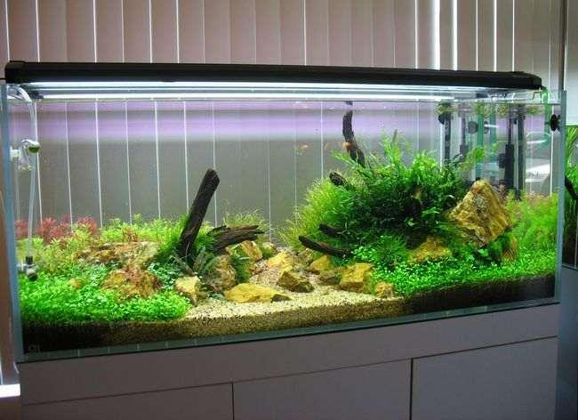 Acquario dove posizionarlo hobbydicasa hobbydicasa for Acquario in casa