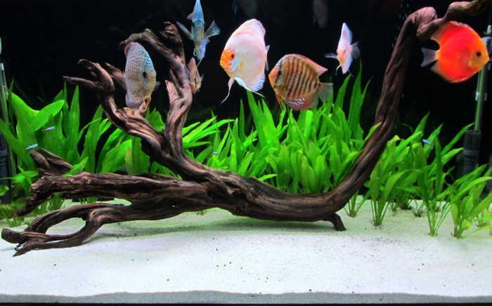 Acquario per singola specie