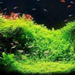Acquari e Aquariofilia, hobby affascinante